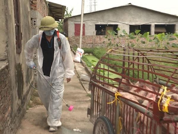 N-Hướng dẫn vệ sinh, khử trùng và tiêu độc để phòng chống bệnh Dịch tả lợn châu Phi