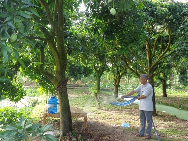 CS-Giải pháp hạn chế tác hại nhiễm mặn đến cây ăn trái