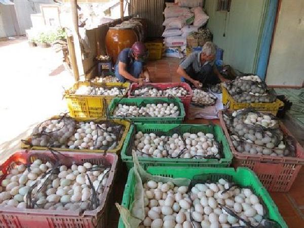 Giá trứng gia cầm tăng mạnh sau chuỗi ngày u ám