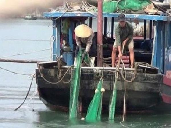 Hiểm họa từ việc đánh bắt hải sản kiểu tận diệt