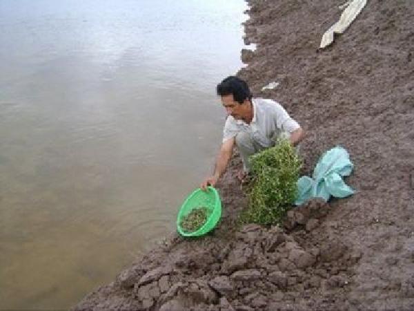 Lạ mà hay: Kiếm bộn tiền từ nuôi cua trên ruộng muối