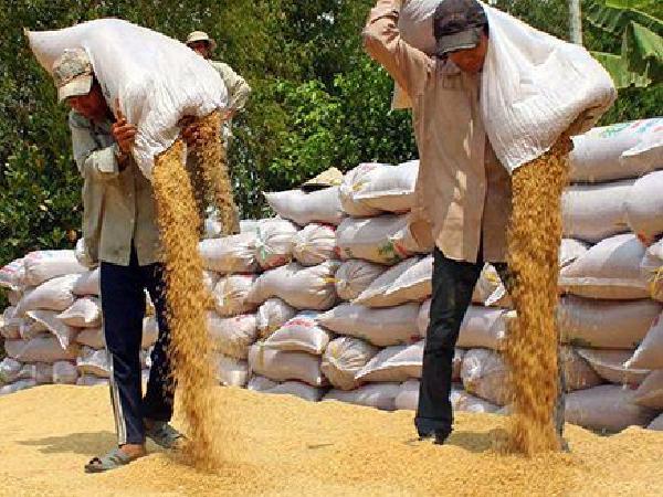 Khi nông dân miền Tây chán trồng lúa