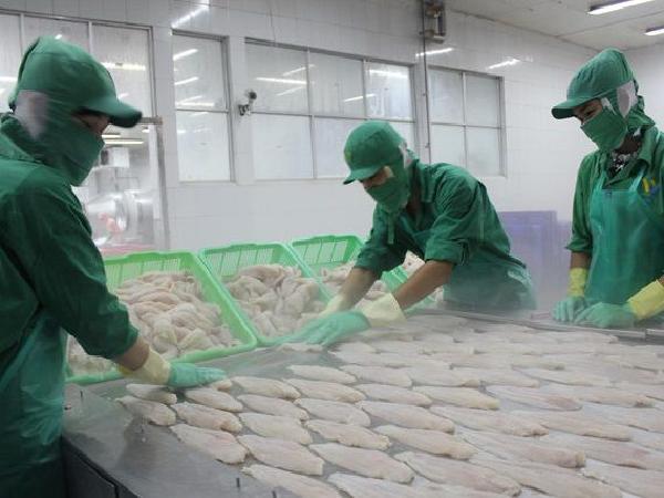 Lươn cạn kiệt, Nhật tăng nhập cá tra Việt Nam thay thế