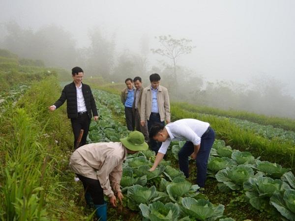 Tuyên Quang: Người Dao đổi đời từ trồng rau sạch