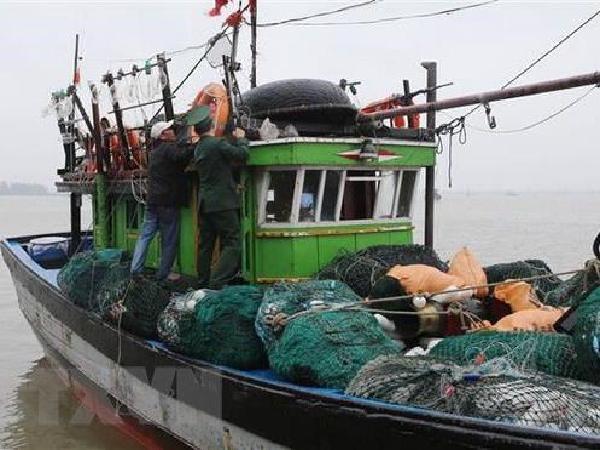 Nghị định mới: Phạt tới 1 tỷ đồng khi vi phạm hành chính trong lĩnh vực thủy sản