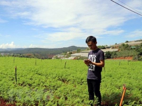 Nông dân trẻ làm vườn từ xa bằng điện thoại thông minh