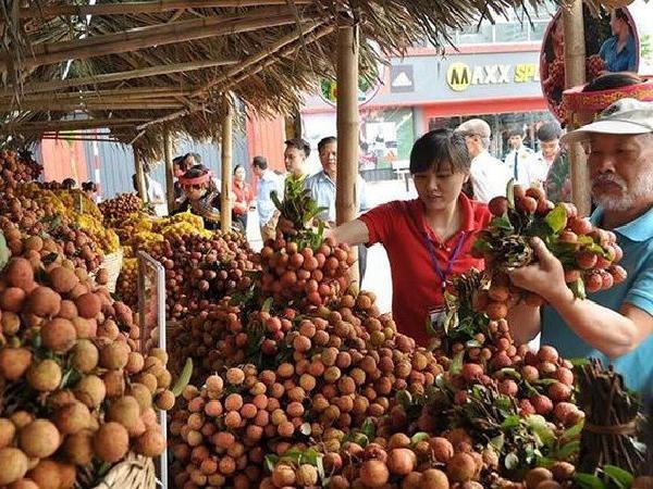 Trung Quốc thu hoạch 500.000 ha vải thiều, Việt Nam ứng phó ra sao?