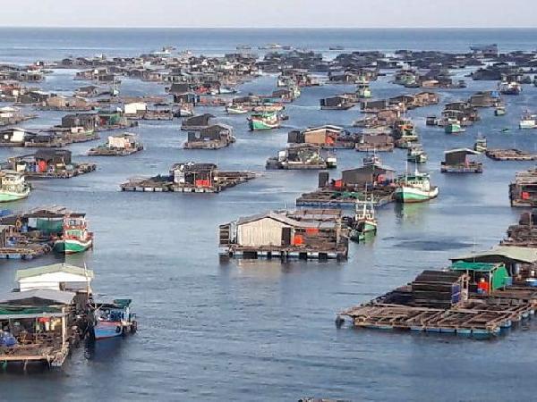 Một số quy định mới trong lĩnh vực nuôi trồng thủy sản bà con cần lưu ý