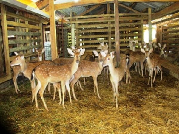 N-Hướng dẫn xây dựng chuồng trại nuôi hươu sao