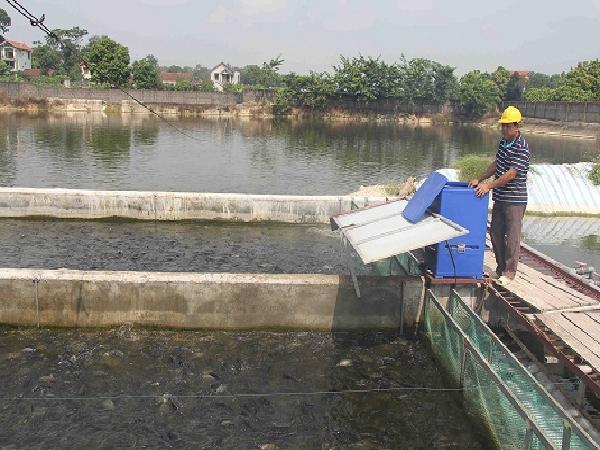 """NT- Kỹ thuật nuôi cá theo hình thức """"sông trong ao"""""""
