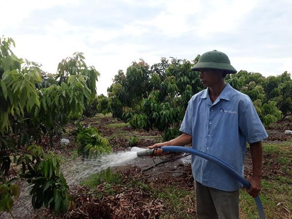Giải pháp mới cho vùng Tây Nguyên: Làm giàu từ trồng vải thiều