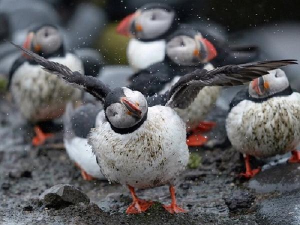 Nóng cao độ, top động vật dễ chết vì biến đổi khí hậu
