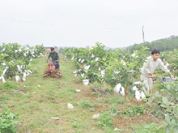 Hà Tĩnh: Hợp tác xã nông nghiệp ứng dụng công nghệ 4.0