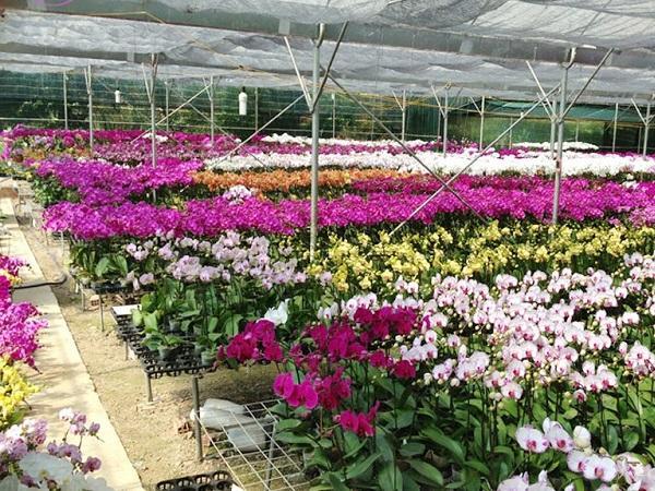 CS-Một số kinh nghiệm trồng hoa lan