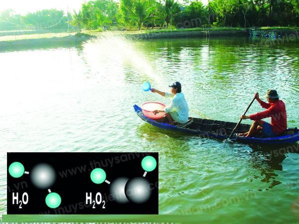 XL-Chất ôxy hóa trong ao nuôi tôm
