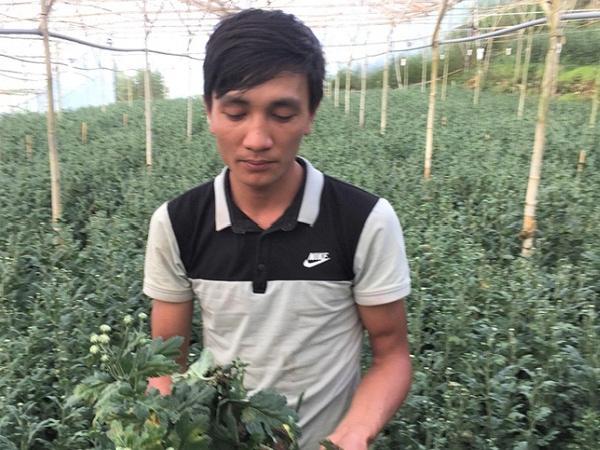 Lâm Đồng: Dịch bệnh trên cây trồng gây thiệt hại nặng cho nhà vườn