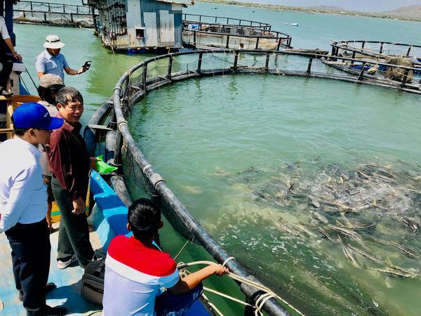 Hiệu quả nhờ ứng dụng công nghệ cao trong nuôi cá lồng bè
