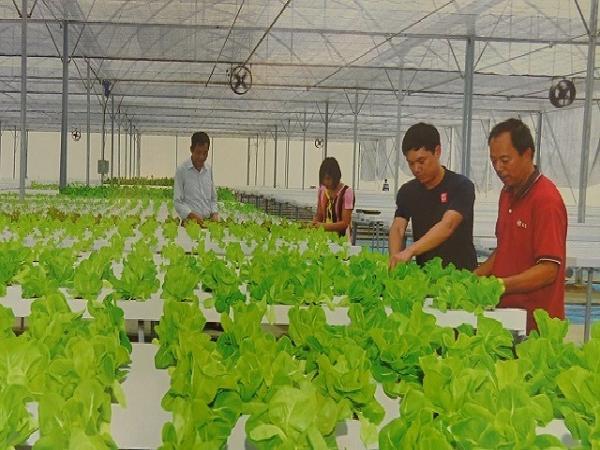 Thanh Trì nhân rộng mô hình trồng rau công nghệ Israel