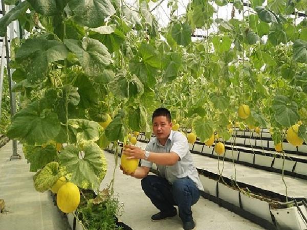Viễn thông Việt Nam - Hỗ trợ phát triển nông nghiệp thông minh