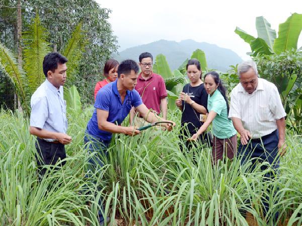 Mô hình mới giúp nâng cao thu nhập cho người dân Cốc Mỳ (Lào Cai)