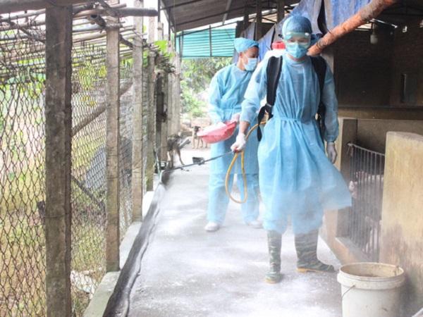 N-Kỹ thuật xử lí chuồng trại nuôi lợn trước khi tái đàn