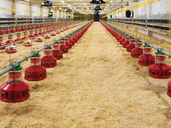 N-Quy trình kỹ thuật sản xuất, sử dụng lớp đệm lót nền chuồng trong chăn nuôi lợn