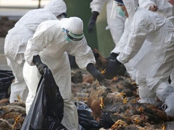 Vừa xuất hiện 2 ổ dịch cúm A/H5N6 tại Bà Rịa - Vũng Tàu