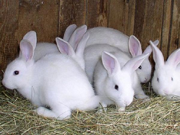 N-Phương pháp nuôi thỏ cái và thỏ sơ sinh