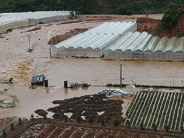 Đà Lạt mưa nhỏ nhưng lũ lớn, hậu quả của nông nghiệp lạm dụng nhà kính