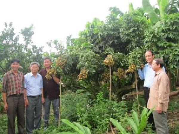 Nông dân Việt Nam khiến cả thế giới thán phục với thành công ghép nhãn trên gốc vải
