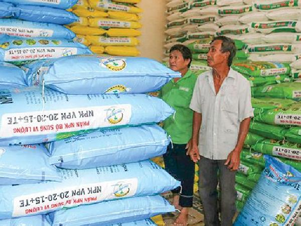 Giá phân bón giảm nhẹ do thị trường cạnh tranh sôi động, nông dân hưởng lợi