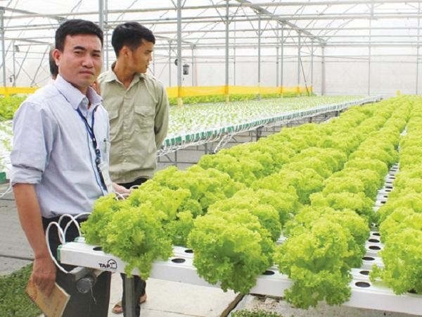 Làm và chia sẻ về nông nghiệp công nghệ cao