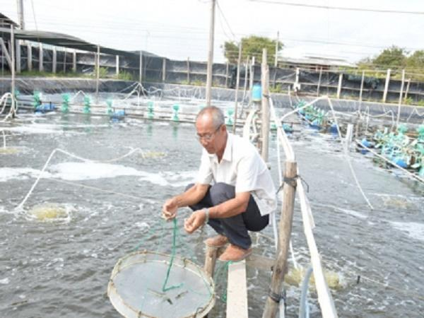Nông dân Ba Sấm đột phá với mô hình nuôi tôm biển công nghệ cao