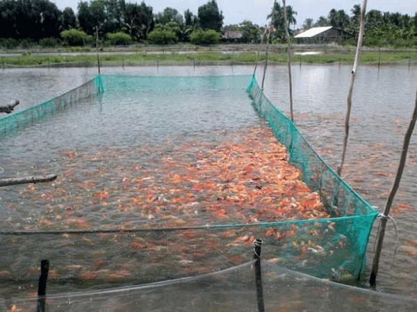 NT-Kỹ thuật phòng và trị bệnh trong nuôi trồng thủy sản