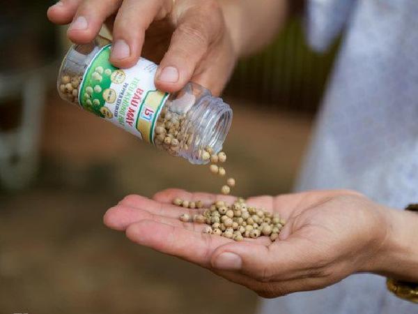 Lần đầu tiên tại Việt Nam: Tiêu 15 triệu đồng/kg có thể ăn sống trực tiếp