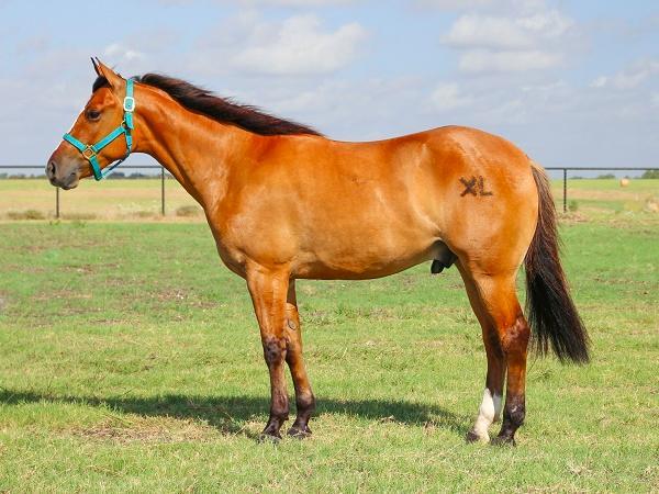 N-Giới thiệu kỹ thuật chăn nuôi ngựa