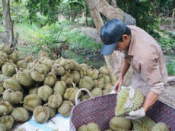 TH-Kỹ thuật xử lý, bảo quản một số trái cây có thế mạnh cạnh tranh xuất khẩu