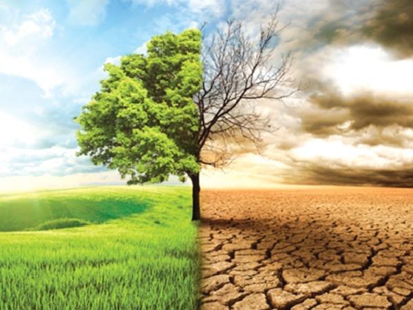 Biến đổi khí hậu đang đe dọa nền nông nghiệp: 30 năm nữa chúng ta sẽ ăn gì?