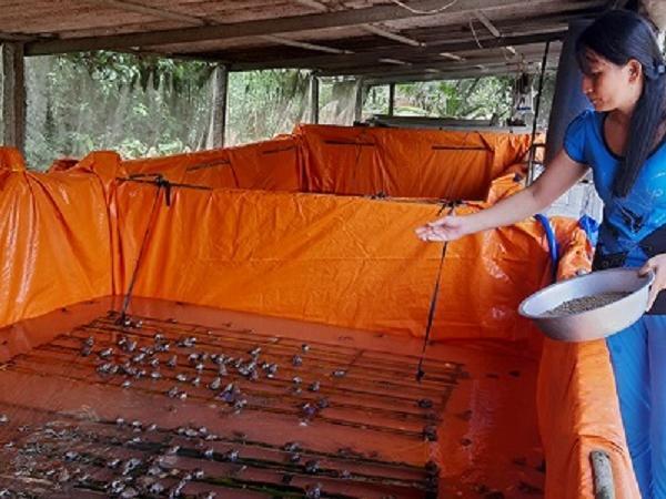 NT-Kỹ thuật nuôi ếch trong bể lót bạt, tận dụng chuồng lợn cũ, thu lợi cao