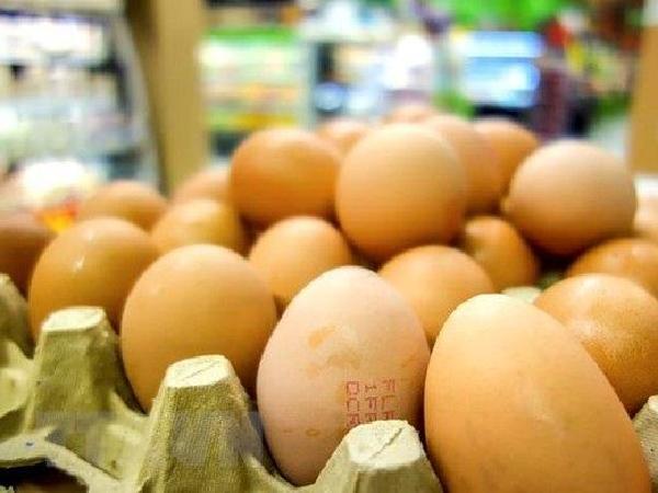 Indonesia buộc tiêu hủy chục triệu quả trứng, giá tại Việt Nam lại tăng đột biến