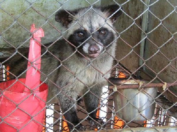 Nghị định mới: Người dân được phép nuôi động vật rừng