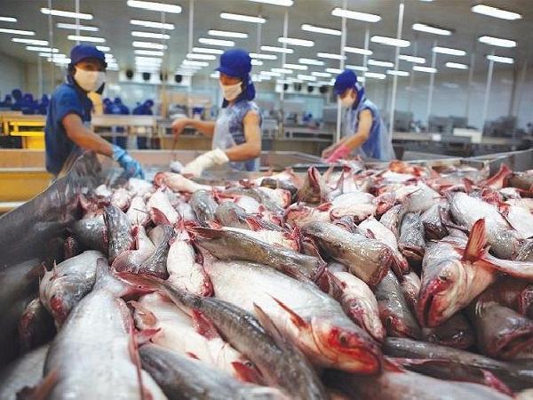 Cá tra organic Việt Nam bán tại Đức hơn 220.000 đồng/kg