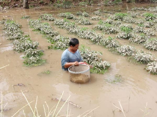 Triều cường dâng cao – nông dân lao đao