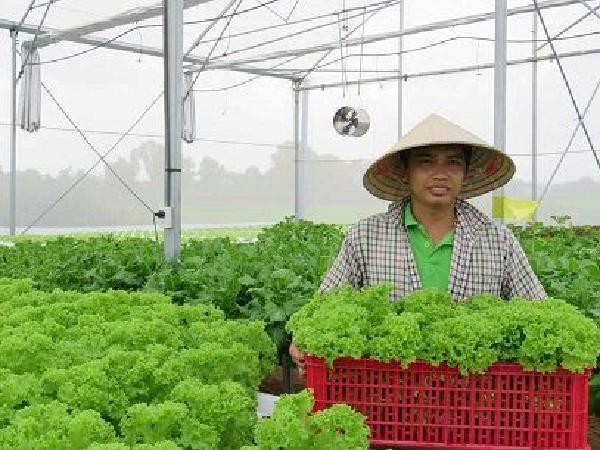 TH-Các biện pháp bảo quản sau thu hoạch rau, củ, quả