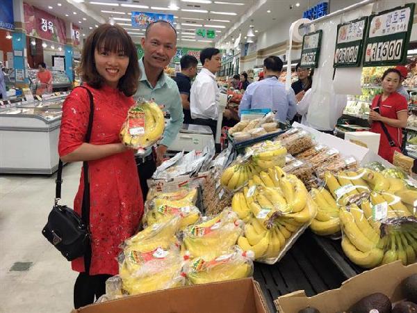 Hành trình quả chuối Việt sang thị trường tỉ dân của vua chuối đất Bắc