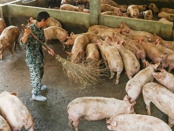 Nông dân nuôi lợn lọt top đại gia giàu nhất Trung Quốc