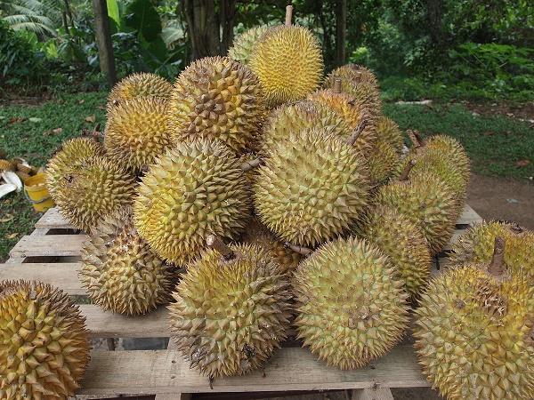 """Sầu riêng Việt chỉ """"lót đường"""" cho sầu riêng Thái – tương lai mịt mù"""