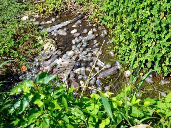 Thảm họa: 15 triệu bóng đèn loại thải - nguy cơ nhiễm thủy ngân
