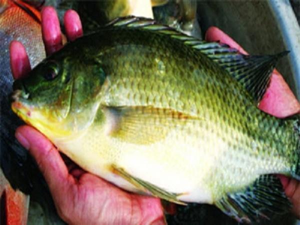 NT-Bổ sung khoáng chất cho động vật thủy sản