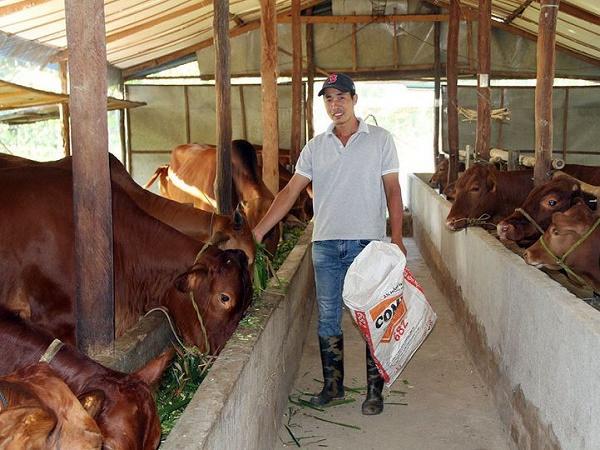 N-Một số vấn đề cần quan tâm khi vỗ béo bò
